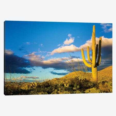 Sunset Saguaro National Park East IV Canvas Print #SKR238} by Susanne Kremer Canvas Art