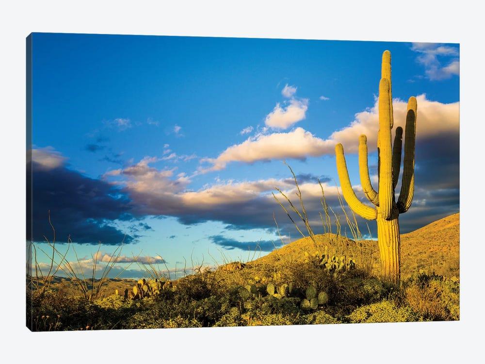 Sunset Saguaro National Park East IV by Susanne Kremer 1-piece Canvas Art Print
