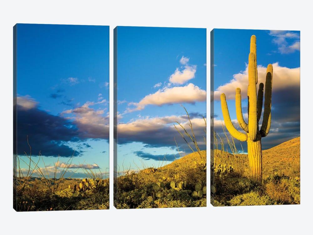 Sunset Saguaro National Park East IV by Susanne Kremer 3-piece Canvas Art Print