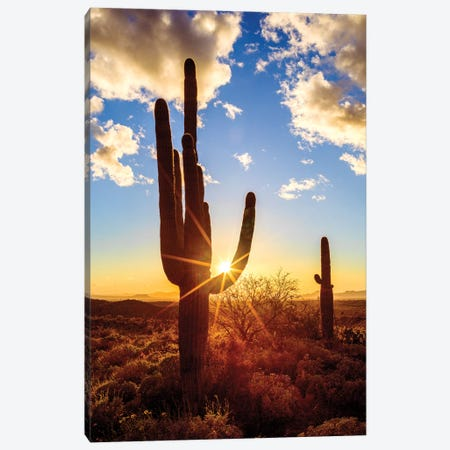 Sunset Saguaro National Park East V Canvas Print #SKR239} by Susanne Kremer Canvas Wall Art