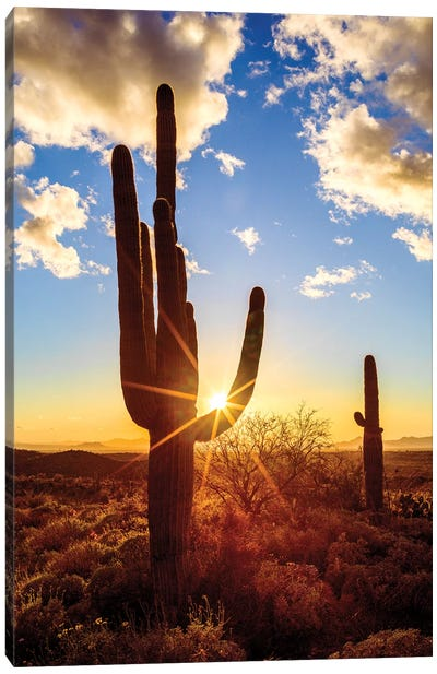Sunset Saguaro National Park East V Canvas Art Print