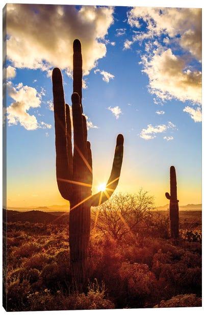Sunset Saguaro National Park East V Canvas Art Print