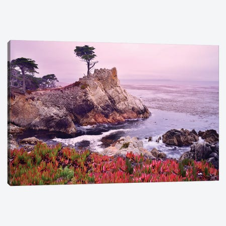 The Lone Cypress, Pebble Beach Canvas Print #SKR245} by Susanne Kremer Canvas Artwork