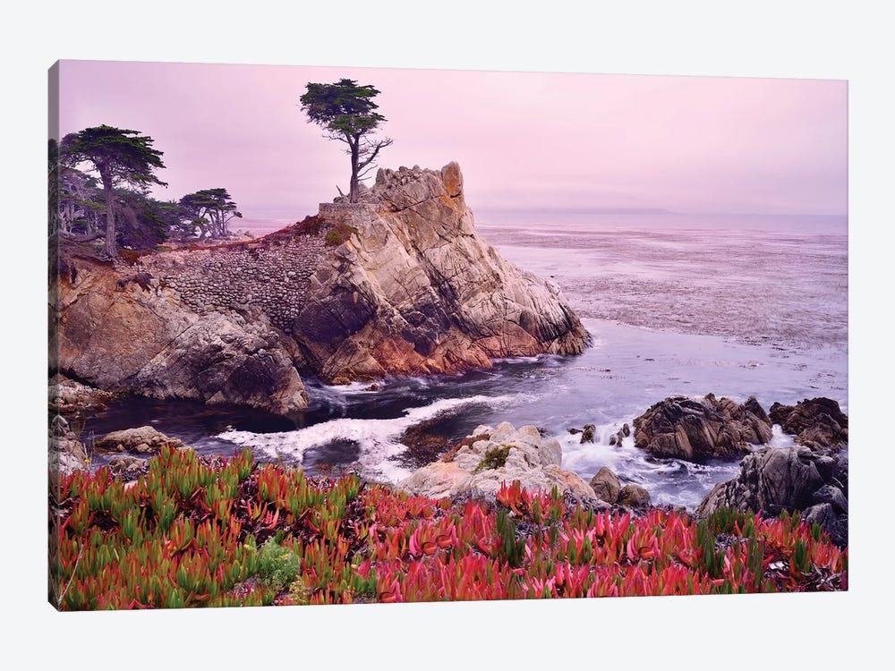 The Lone Cypress, Pebble Beach by Susanne Kremer 1-piece Art Print