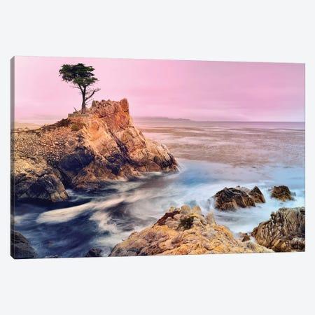 The Lone Cypress, Pebble Beach Canvas Print #SKR246} by Susanne Kremer Canvas Art