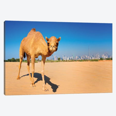 Camel in the Dessert with Dubai Skyline Canvas Print #SKR28} by Susanne Kremer Canvas Artwork