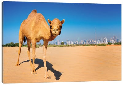 Camel in the Dessert with Dubai Skyline Canvas Art Print