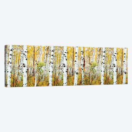 Aspen Trees Panorama ,Colorado Canvas Print #SKR354} by Susanne Kremer Canvas Wall Art