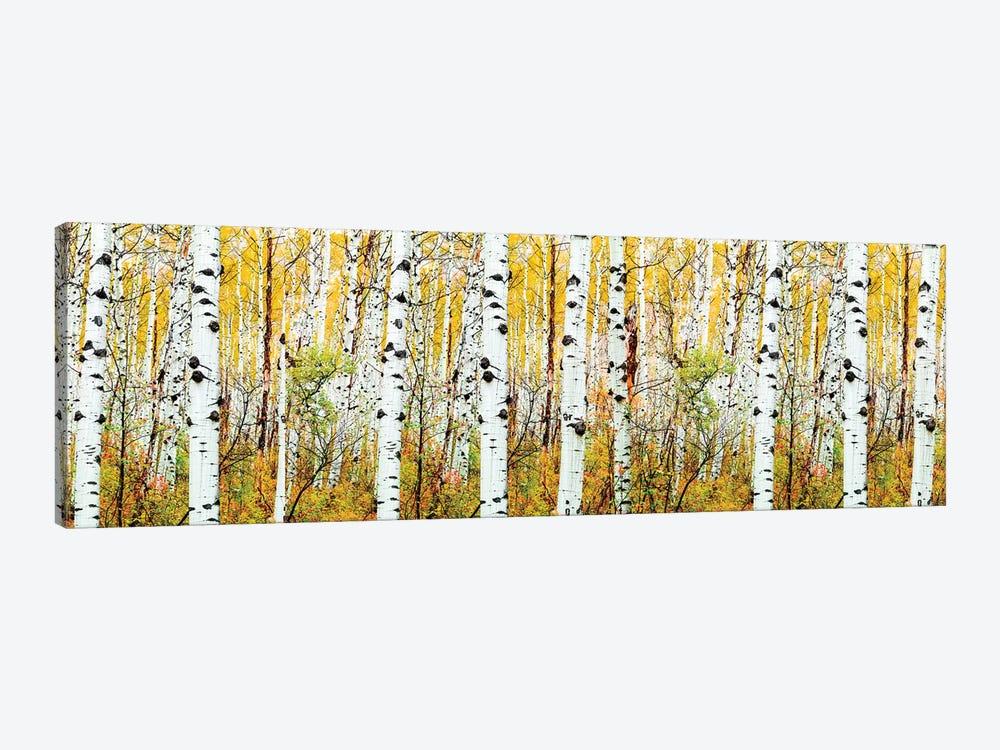 Aspen Trees Panorama ,Colorado by Susanne Kremer 1-piece Canvas Artwork