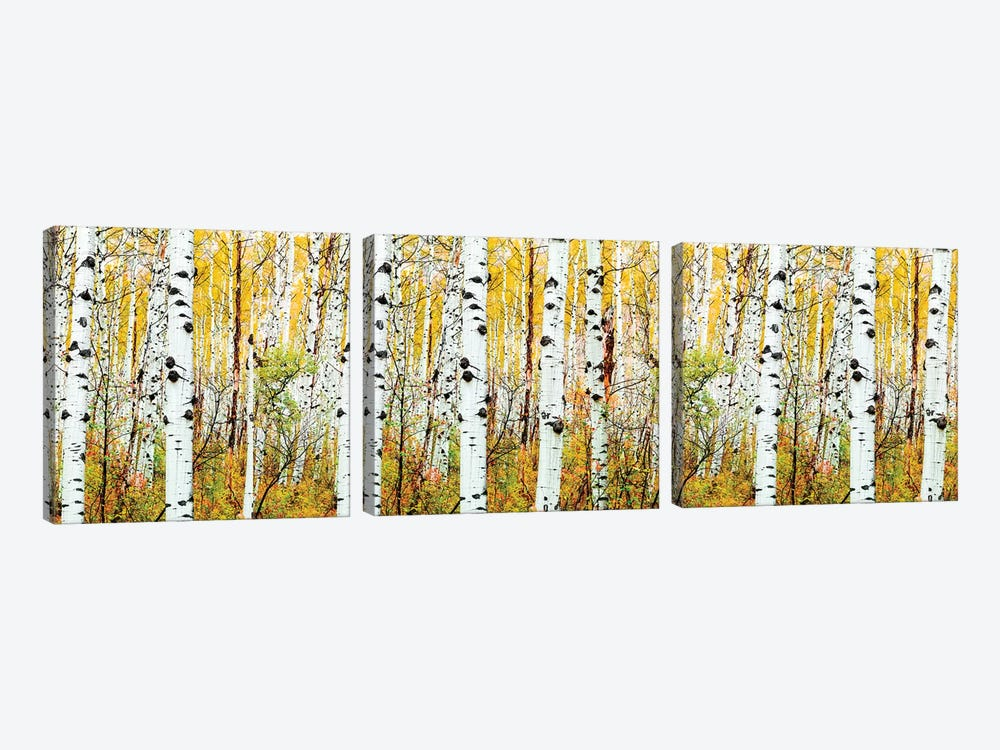 Aspen Trees Panorama ,Colorado by Susanne Kremer 3-piece Canvas Art
