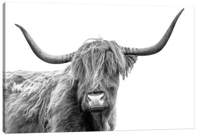 Looking At You III, Scottish Highland Cow Black And White Canvas Art Print