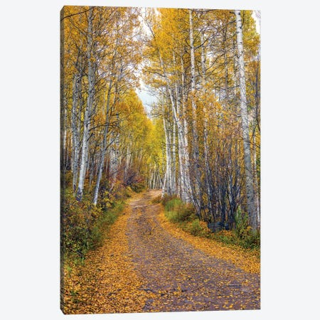Fall In Aspen Colorado Canvas Print #SKR436} by Susanne Kremer Canvas Print