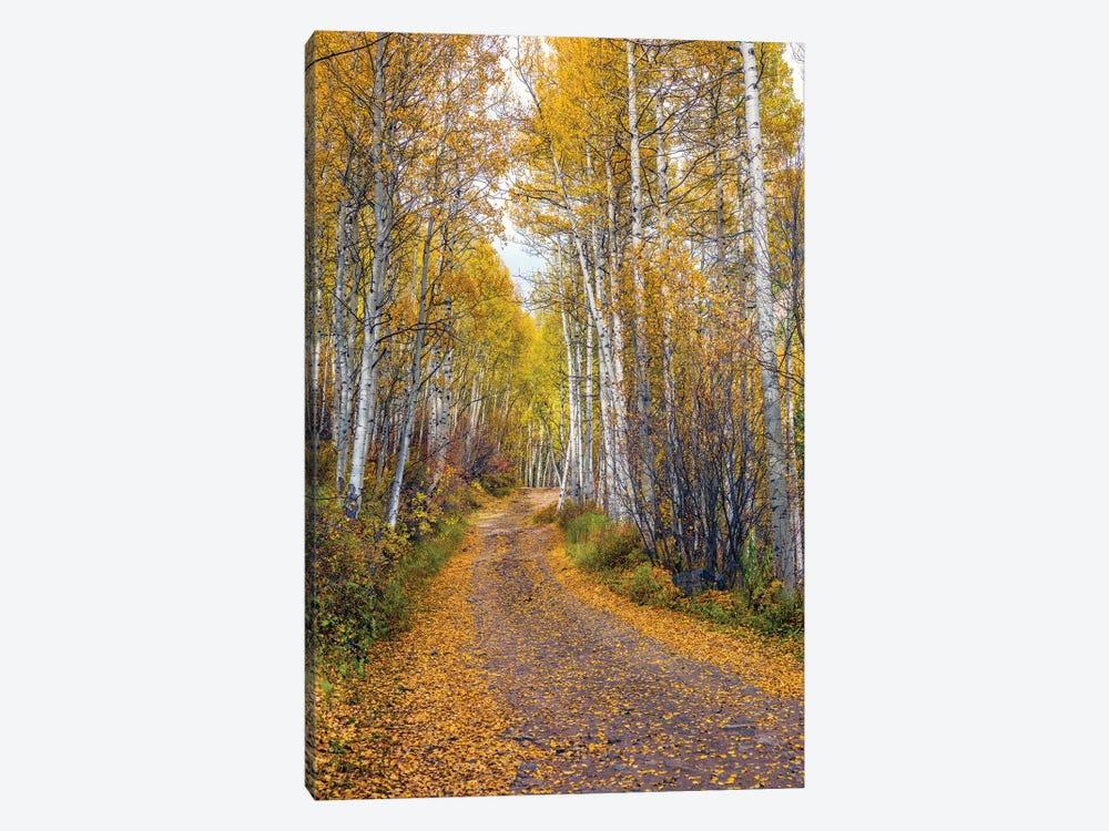Fall In Aspen Colorado by Susanne Kremer 1-piece Art Print