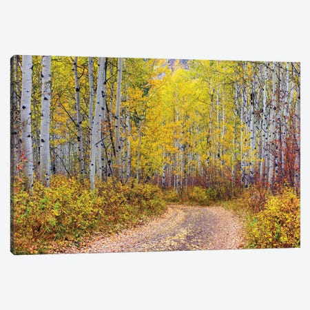 Aspen Forest,Colorado Canvas Print #SKR437} by Susanne Kremer Canvas Print
