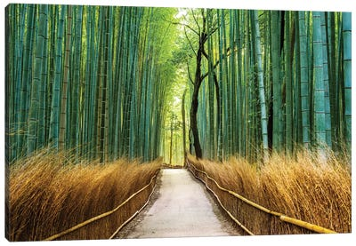 Arashiyama Ancient Bamboo Forest  Canvas Art Print