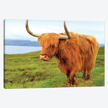 Highland Cow I Canvas Print #SKR84} by Susanne Kremer Canvas Print