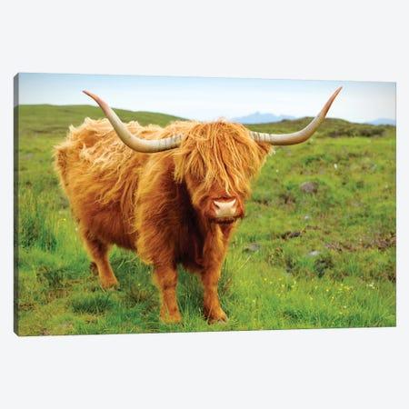 Highland Cow II Canvas Print #SKR85} by Susanne Kremer Art Print