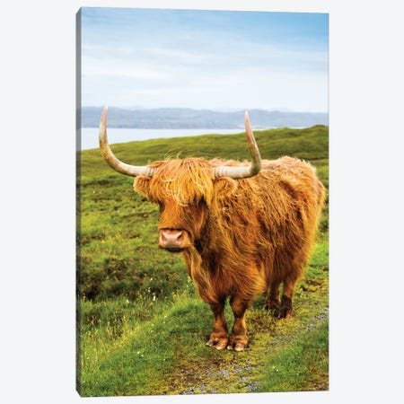 Highland Cow III Canvas Print #SKR86} by Susanne Kremer Canvas Art Print