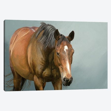 Meandering Canvas Print #SLA10} by Sally Lancaster Canvas Print
