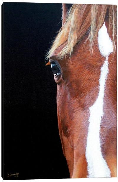 Peekaboo Canvas Art Print