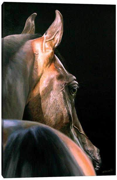 Arabian Beauty Canvas Art Print