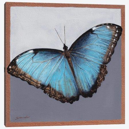 Blue Morpho Canvas Print #SLA58} by Sally Lancaster Canvas Print