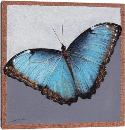 Blue Morpho Canvas Art Print