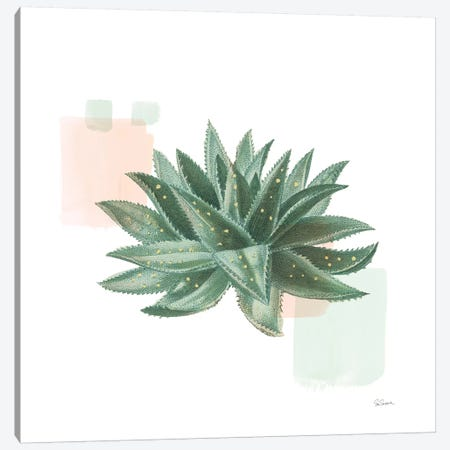 Desert Color Succulent II Mint Canvas Print #SLB104} by Sue Schlabach Canvas Art