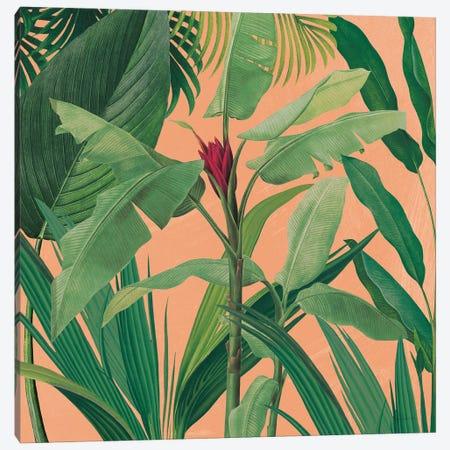 Dramatic Tropical I Boho Canvas Print #SLB120} by Sue Schlabach Art Print