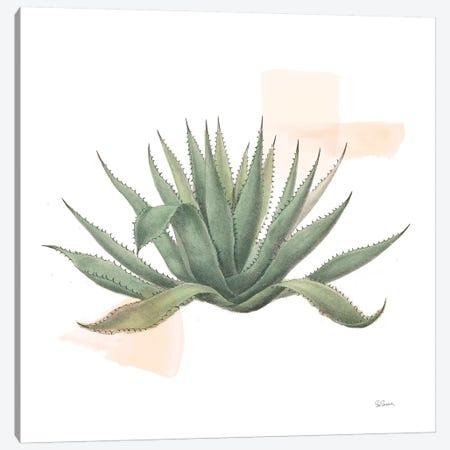 Desert Color Succulent I Canvas Print #SLB36} by Sue Schlabach Canvas Art Print