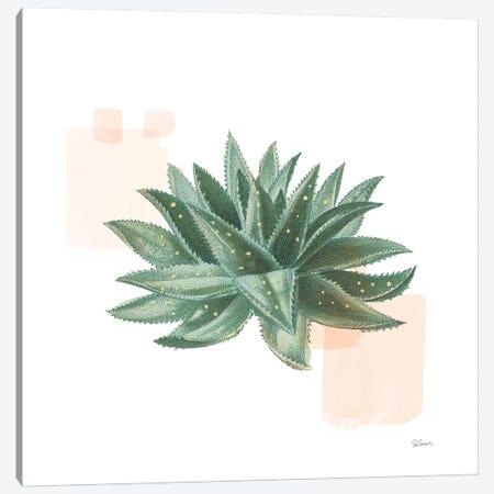 Desert Color Succulent II Canvas Print #SLB37} by Sue Schlabach Canvas Art Print