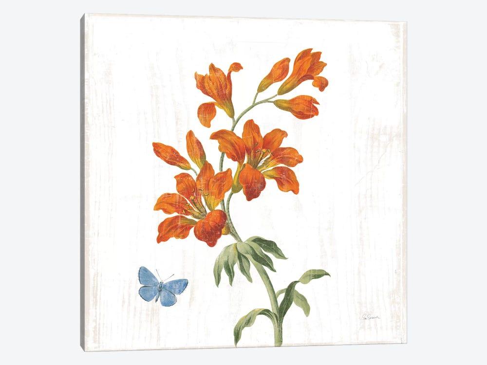 White Barn Flowers VII Sq by Sue Schlabach 1-piece Canvas Art