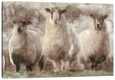 Three Sheep Canvas Art Print
