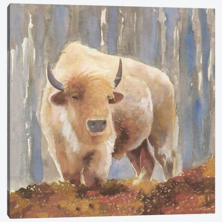 White Buffalo Canvas Print #SLD120} by Stellar Design Studio Canvas Print