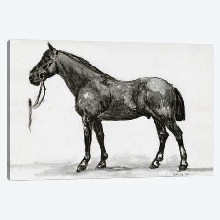 Horse Study IV Canvas Print #SLD132} by Stellar Design Studio Canvas Wall Art
