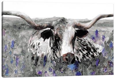 Longhorn in Flower Field Canvas Art Print