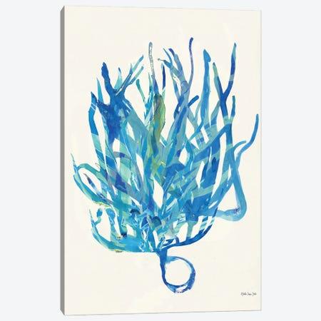 Coral Medley II Canvas Print #SLD163} by Stellar Design Studio Canvas Art Print
