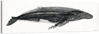 Gray Whale II Canvas Art Print