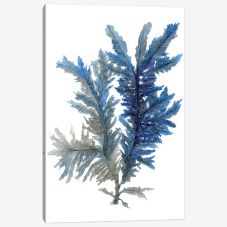 Ocean Bloom I Canvas Print #SLD18} by Stellar Design Studio Canvas Wall Art