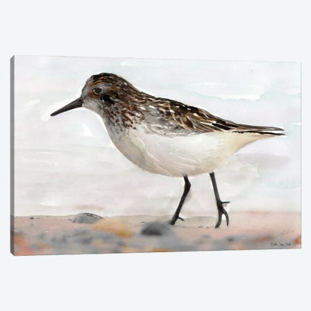 Sandpiper II Canvas Print #SLD191} by Stellar Design Studio Canvas Artwork