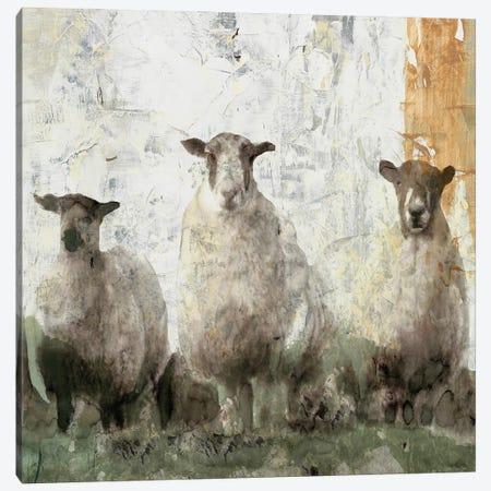 Three Sheep Canvas Print #SLD198} by Stellar Design Studio Canvas Art