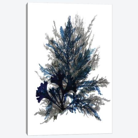 Ocean Bloom II Canvas Print #SLD19} by Stellar Design Studio Canvas Art