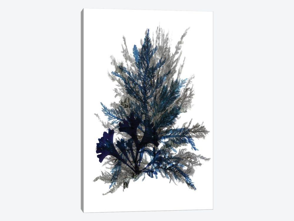 Ocean Bloom II by Stellar Design Studio 1-piece Canvas Artwork