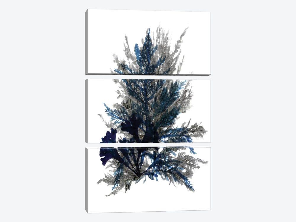 Ocean Bloom II by Stellar Design Studio 3-piece Canvas Artwork
