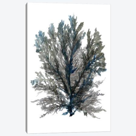 Ocean Bloom III Canvas Print #SLD20} by Stellar Design Studio Canvas Art Print