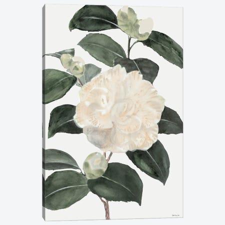 White Botanical III 3-Piece Canvas #SLD213} by Stellar Design Studio Canvas Print