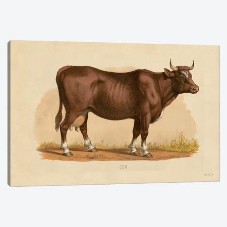 Cow Canvas Print #SLD214} by Stellar Design Studio Canvas Wall Art