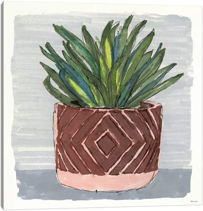 Potted Agave II Canvas Art Print
