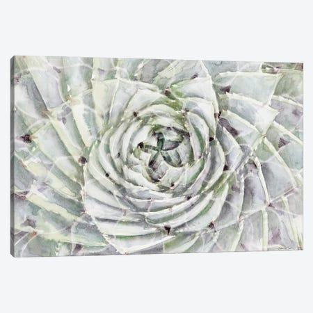 Succulent Macro Canvas Print #SLD226} by Stellar Design Studio Canvas Print