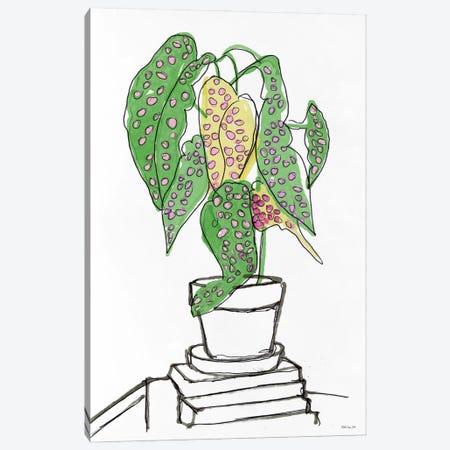 House Plant Study II Canvas Print #SLD258} by Stellar Design Studio Canvas Art Print
